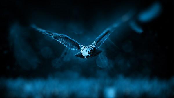 Сова ночью летит широкоформатные обои hd