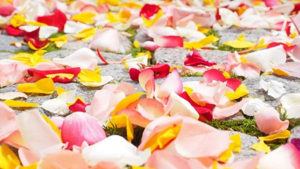 Фон лепестков роз цветов