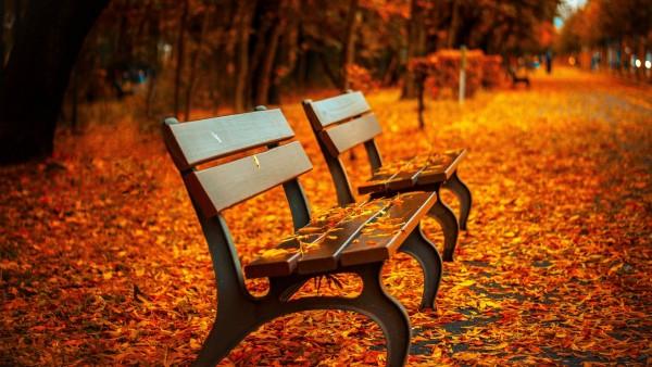 Осенью скамейке, скамейка, осень, фото, листва, золотая осень, аллея