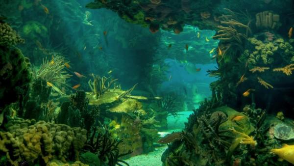 HD, море, морское дно, пейзаж, подводный океан, рыба, фото, скачать, обои