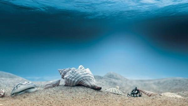 раковины морского дна, ракушка, фоны