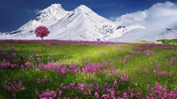 Горные заснеженные вершины на фоне красочного поля цветов