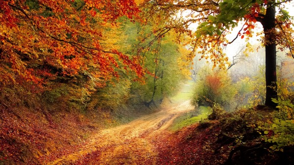 Красивая осень, дорога, листва, деревья