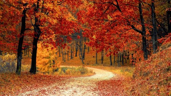 Широкоформатные обои осень