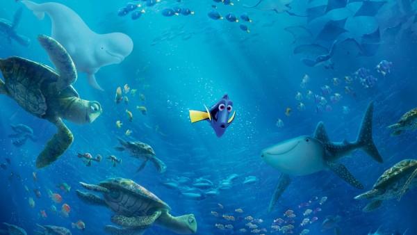 дори, мультфильм, немо, рыбка, акула, черепаха, обои, hd