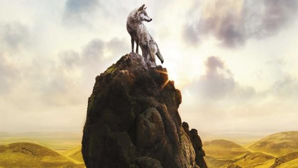 волк, небо, гора, камень, хищник обои