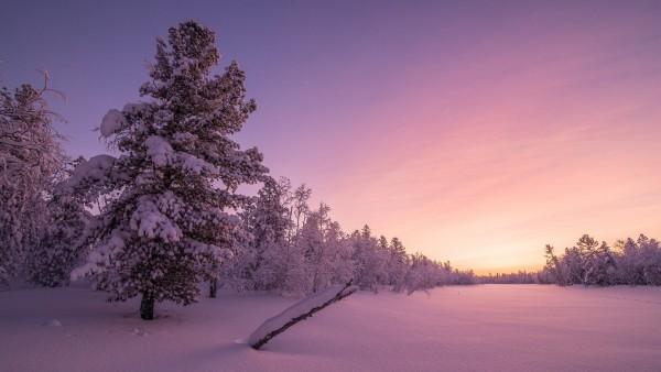 морозный рассвет, лес, зима, природа, деревья, снег, пейзаж широкоформатные обои