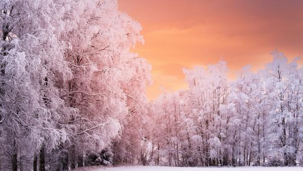Зимний лес покрытый снегом красивые широкоформатные обои