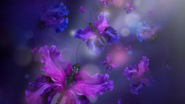бабочки, лепестки, пурпурный, флора, цветы обои HD