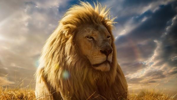 Королевский лев картинки