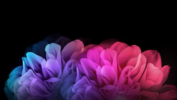 Цветные цветы на темном фоне
