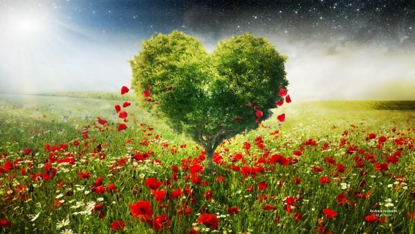 Дерево в форме сердца на фоне макового поля цветов обои HD