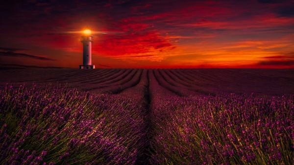 маяк в поле заливной лаванды обои