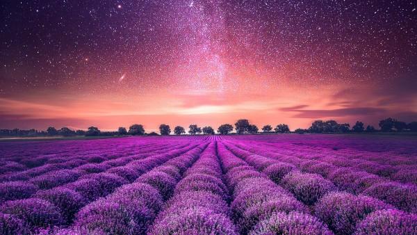 Звездное небо лаванды картинки