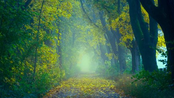 Осенний туманный лес картинки