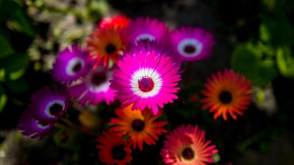 Красивые цветы обои 4K