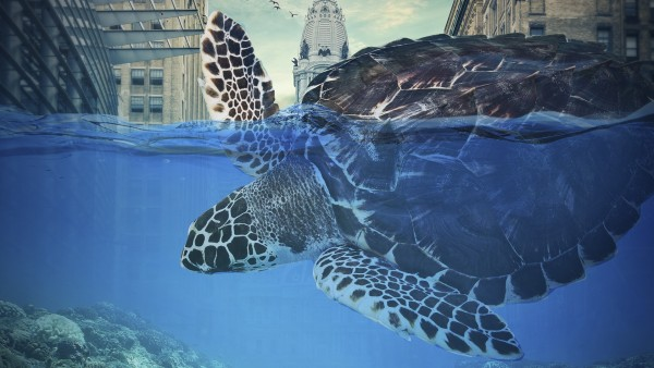 Гигантская черепаха обои HD