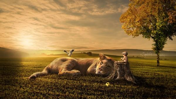 закат, малыш, сон, лев