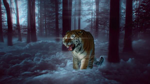 Мистический тигр в лесу обои