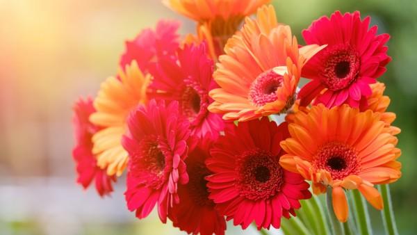 Букет цветов обои HD