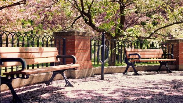 Цветущие деревья в парке