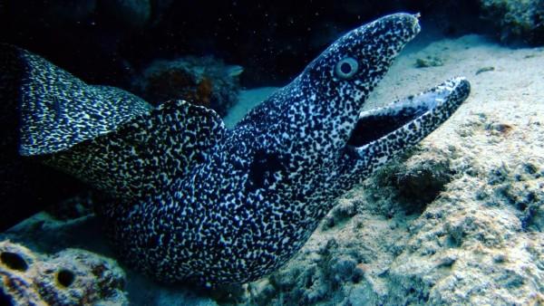 Угри подводный мир обои морских обитателей