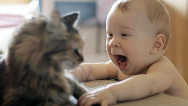Смешные обои животных и детей