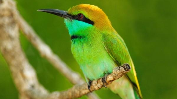 Обои ярко зеленой птички на ветке