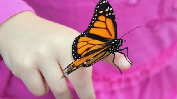 Бабочка на пальчике ребенка