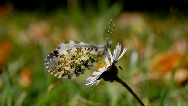 Бесплатные картинки бабочка на цветке