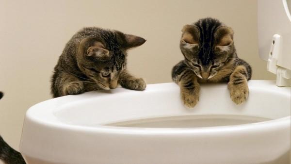 Котики ловят рыбу в унитазе юмор картинки