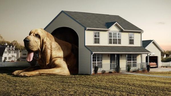 Креативные обои собака в доме