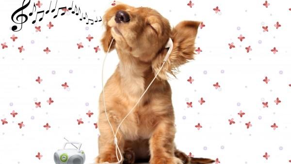 Обои собаки которая слушает музыку