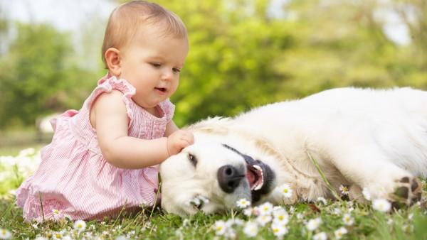 Маленькая девочка чешет шею собаке заставка