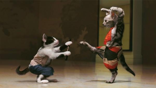 Кунфу в исполнении котов, смешные обои фэнтези