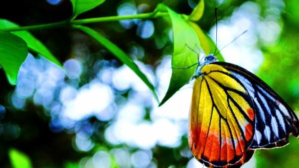 Листья, бабочка, бабочки, насекомые, зелень, лето