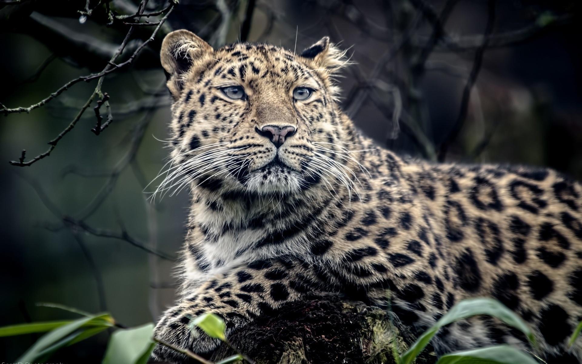 скачать 3d картинки животных