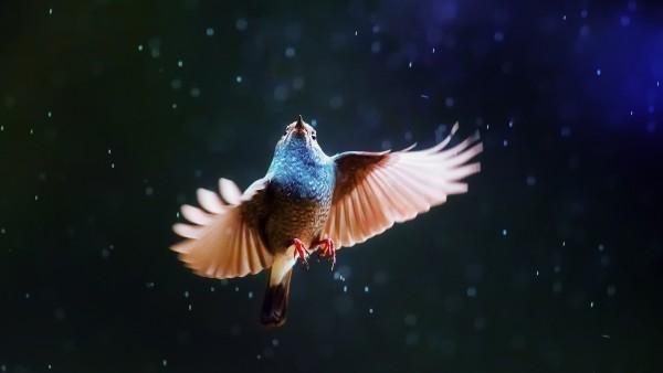 Макро обои птицы под дождем