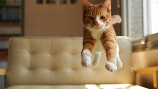 1920x1200, Рыжий котенок прыгает на диване