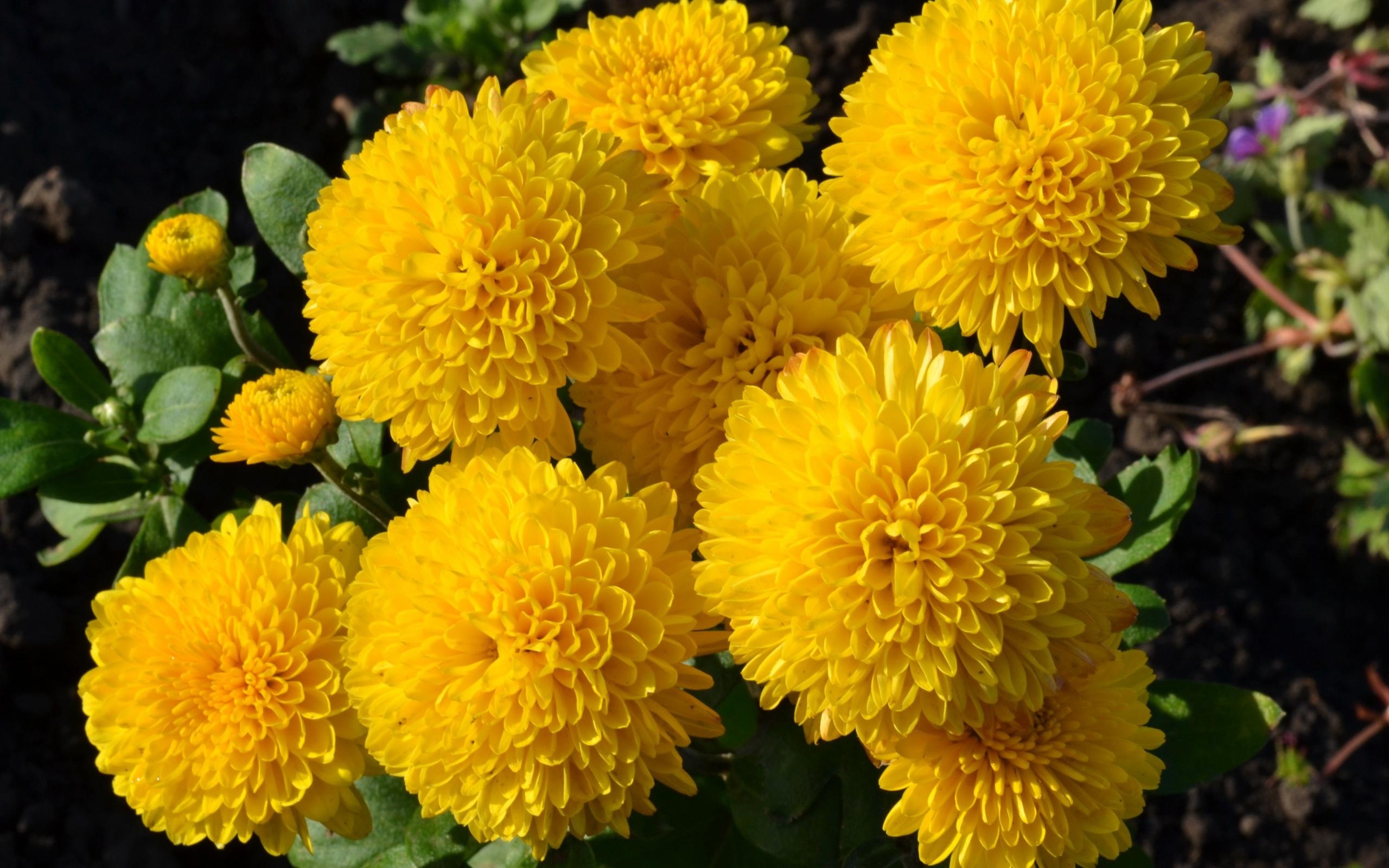 Желтые цветы в лесу и названия 75