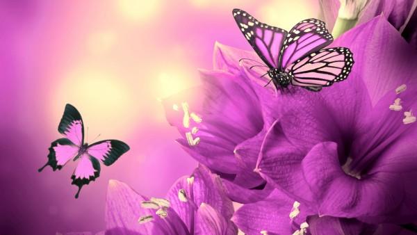 Фиолетовые цветы и бабочки