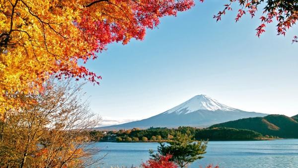 Осенние деревья красочные листья
