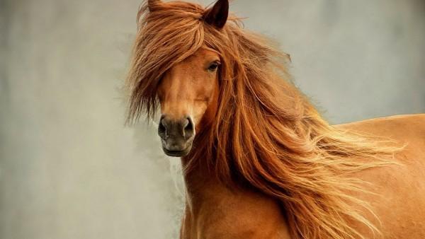 Обои лошади скачать