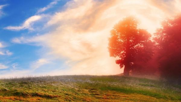 2560x1600, природа, деревья,-красные листья, облака