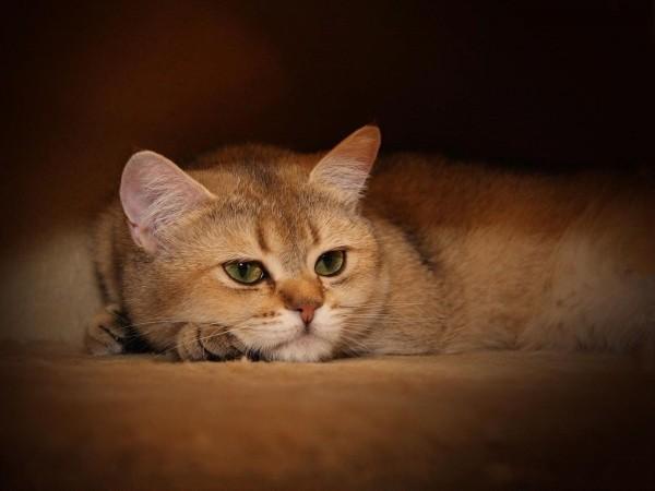 1600x1200, Рыжий кот перед сном