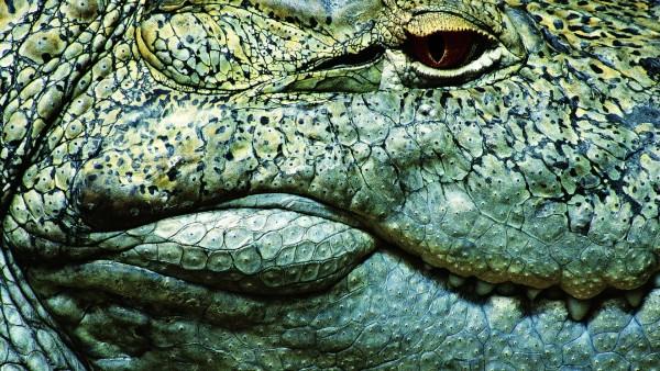 1920x1200 Крокодилий глаз фото