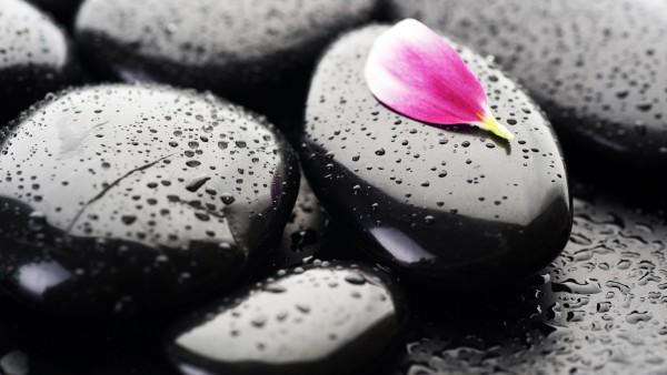 2560x1600, Макро обои лепесток на черных камнях