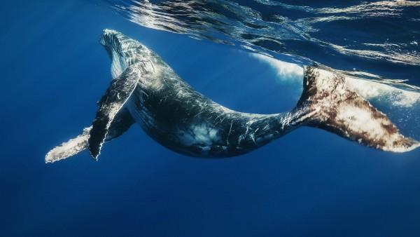 2560x1600, Большой кит в море