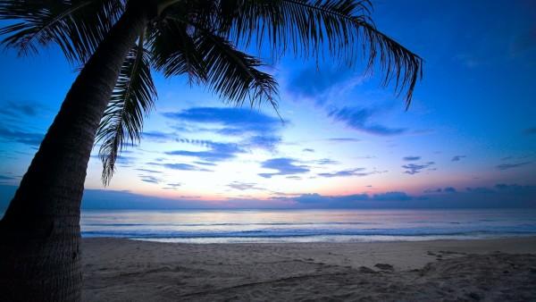 Пальма на песке у моря обои на рабочий стол