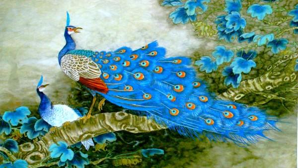 Божественный павлин ярких окрасок